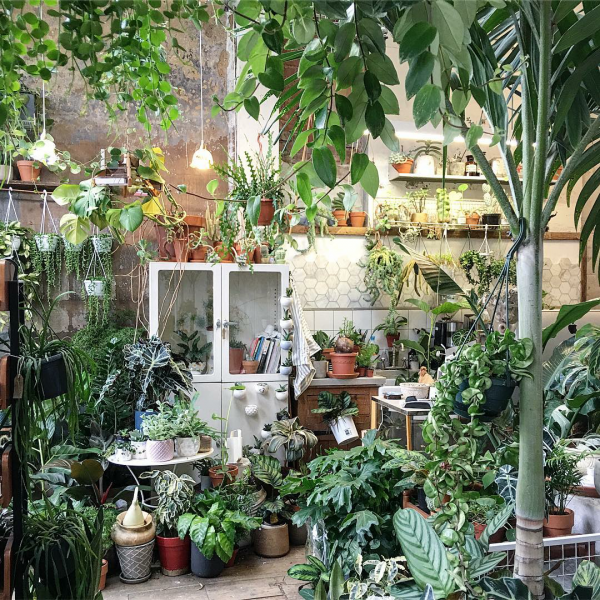 10-pretty-plant-shops-conservatory_archives
