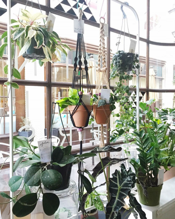 10-pretty-plant-shops-foliacollective