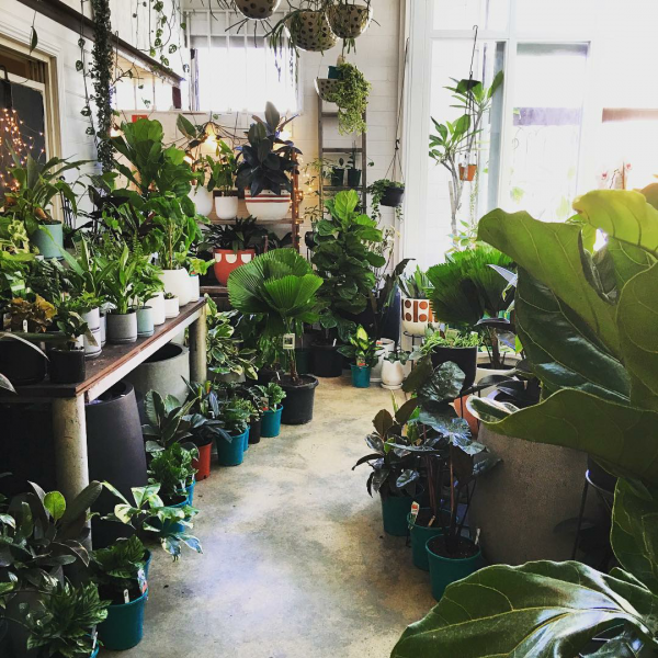 10-pretty-plant-shops-littleleafco