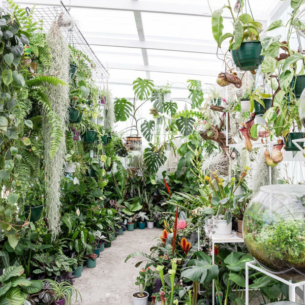 10-pretty-plant-shops-plantbypackwood