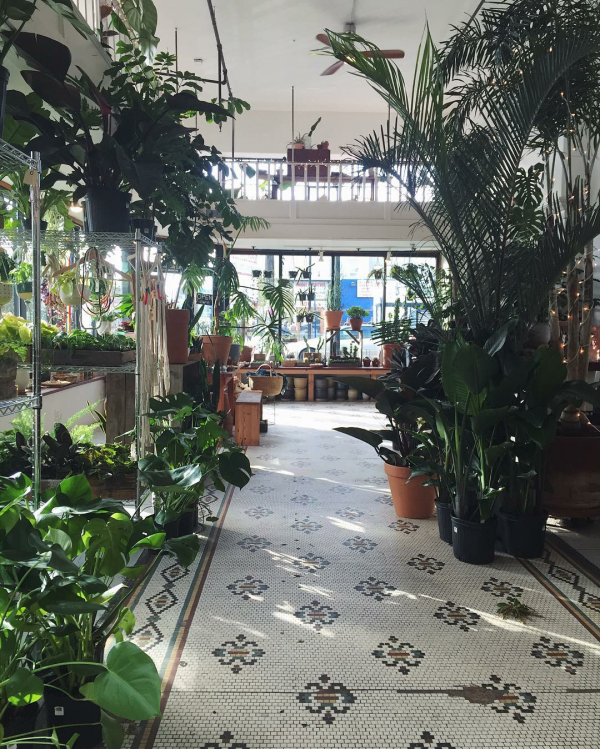 10-pretty-plant-shops-solabeeflowers