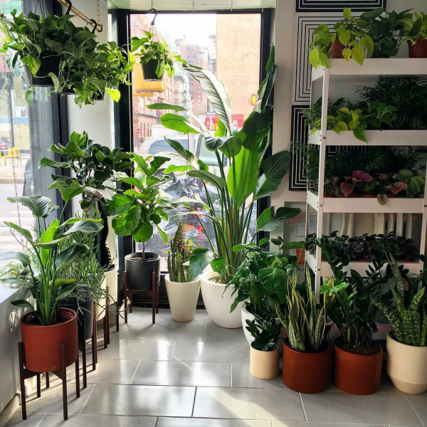 10-pretty-plant-shops-thesill